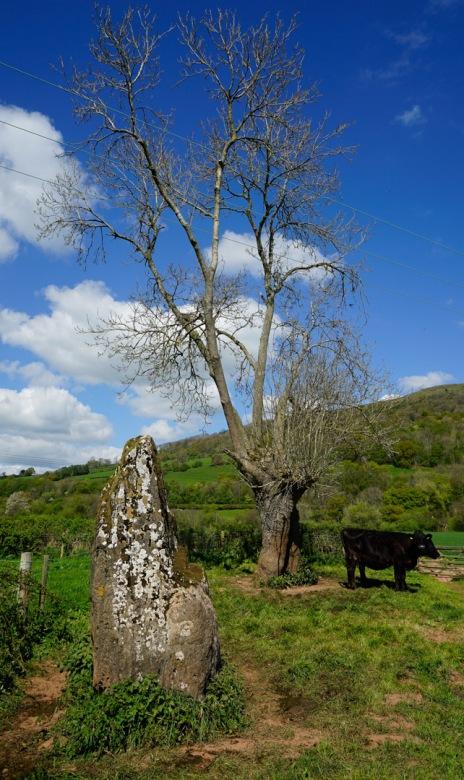 Stone and Tree
