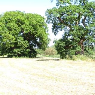 Oaks at Gilestone Farm